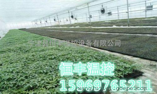 """种植取暖设备给种植物一个""""温暖""""的家"""