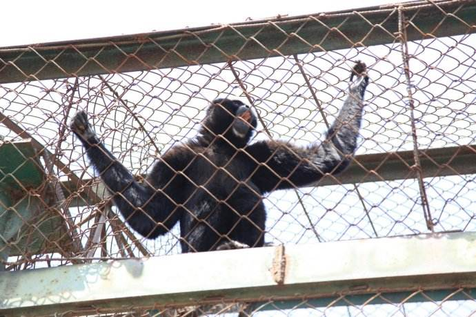 动物园围护网-大型狮虎园区防护围网-猛兽园隔离护栏
