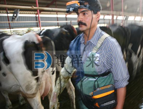 牛用B超仪
