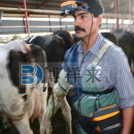 手持式牛用B超�y孕�x