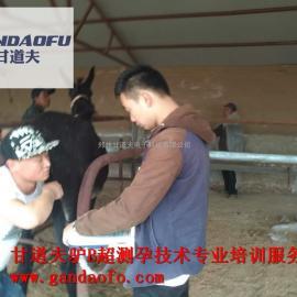 驴用B超使用方法检查母驴怀孕空怀图片视频教程