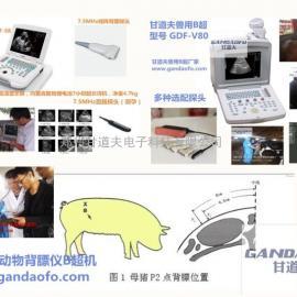 笔记本式驴用B超测孕仪价格,毛驴快速测孕仪B超报价多少钱