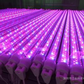 冰库LED灯具