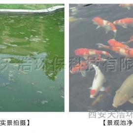 景观河人工湖水循环过滤设备|景观湖水净化过滤设备生产厂商