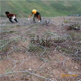 主动防护网土壤修复¥西藏主动防护网¥边坡防护网实体工厂