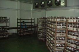 蘑菇培育房