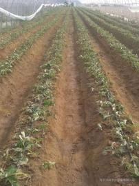 灌溉�水滴灌系�y使用注意事�