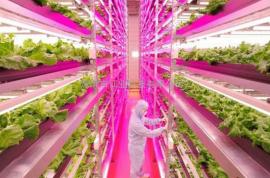 led植物灯管 植物灯 大棚植物补光灯 植物灯管 植物生长灯 多肉