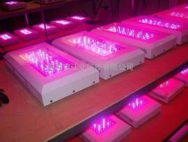 激光植物生长灯 蔬菜大棚补光灯|花卉补光灯