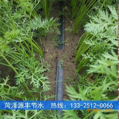 滴灌胡萝卜种植技术步骤和措施