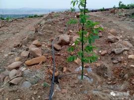 霈泽果树滴灌系统组成小管出流