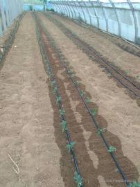 节水灌溉系统设施滴灌带