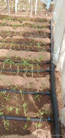 温室大棚蔬菜节水滴灌技术简单介绍