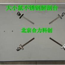 大小鼠解剖台 解剖板 不锈钢