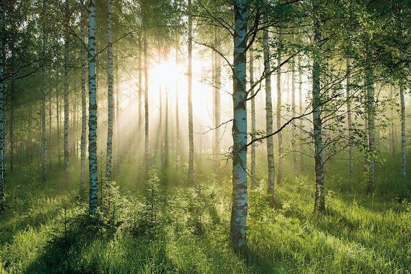 亚迪卡高清优质壁画森林系列图片