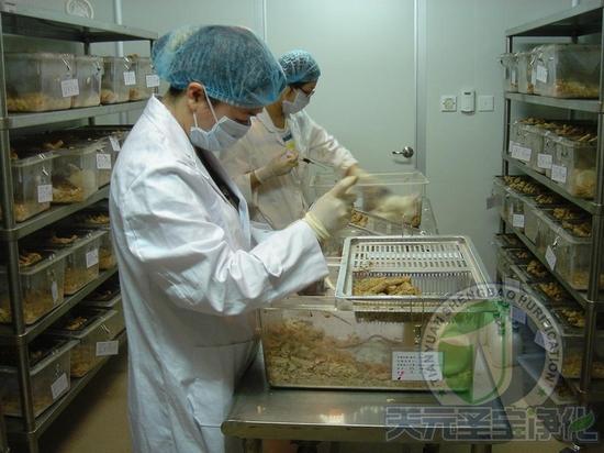 生物实验室分类 1. 一般生物安全防护实验室(不使用实验脊椎动物和昆虫)。    2. 实验脊椎动物生物安全防护实验室。 生物实验室分级 每类生物安全防护实验室根据所处理的微生物及其毒素的危害程度各分为四级。各级实验室的生物安全防护要求依次为:一级最低,四级最高。 实验室适用范围 1.