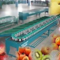 西红柿选果机 西红柿分选设备 西红柿分选设备