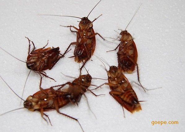 如果蚊子灭绝了会有什么动物灭绝