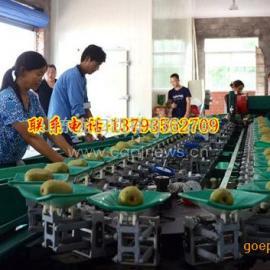 四川安岳全自动电脑控制柠檬选果机,柠檬电子感应分选机