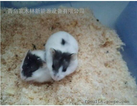 宠物垫窝刨花木屑/仓鼠专用垫料/出口优质宠物垫料