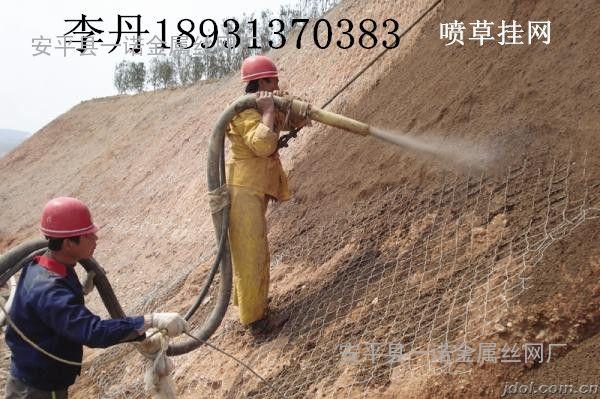 忠县植草挂镀锌铁丝网 14#/50-重庆高速主动防护网-勾花网厂家