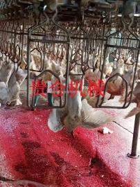 乳鸽自动宰杀机械设备 肉鸽自动屠宰流水线 家禽屠宰机械